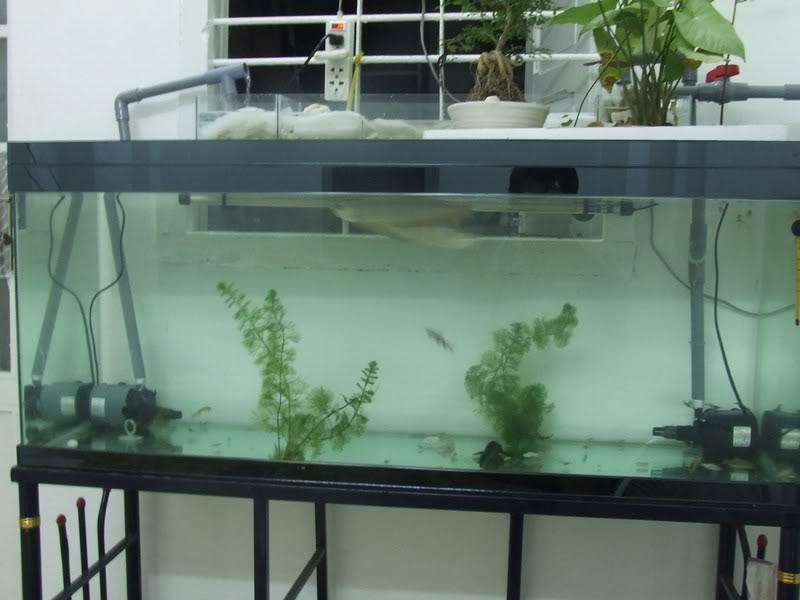 Bán máy lọc bể cá chính hãng giá rẻ, chất lượng cao khi sử dụng (1)